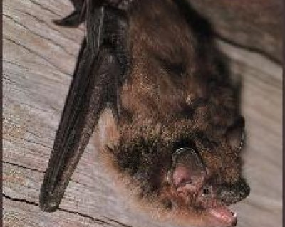 Bat Control Charlotte