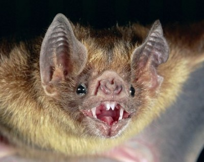 Bat Exterminator Denver Catawba Springs NC Lincoln County