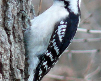 Huntersville NC Bird Removal Bird Control Mecklenburg County