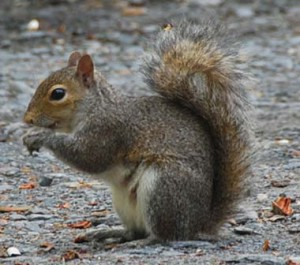 Davidson Squirrel Exterminator