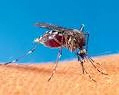 Mosquito Control Charlotte NC