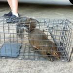 Mooresville NC Squirrel Control