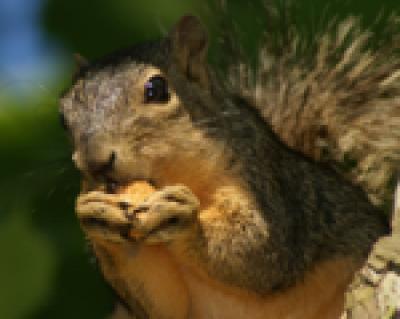 Squirrels in the Attic Denver NC