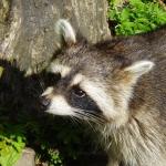 Wildlife Removal Charlotte NC