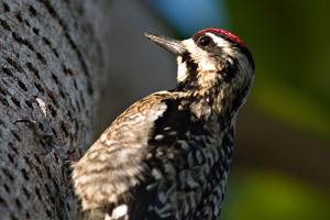 Bird Removal Bird Control